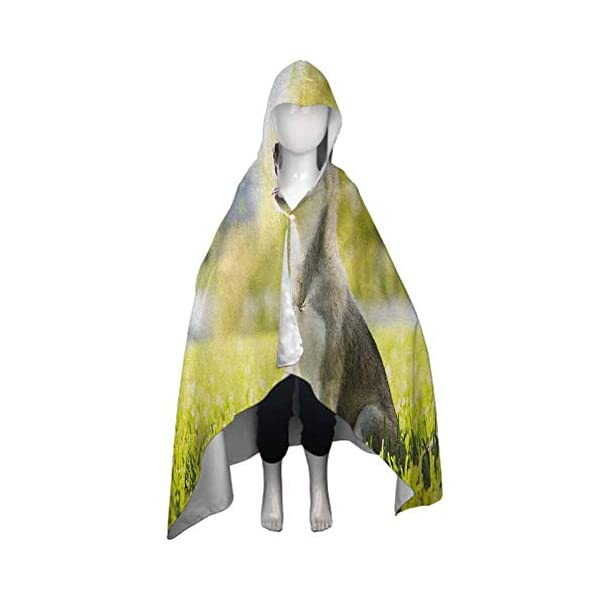 painting-home Alaskan Malamute,Baby Hooded Towel Made by Natural Materials Klee Kai Puppy Sitting on Grass Looking Up Friendly Young Cute Animal Soft and Absorbent Multicolor,51.5 x 31.8 inch 2