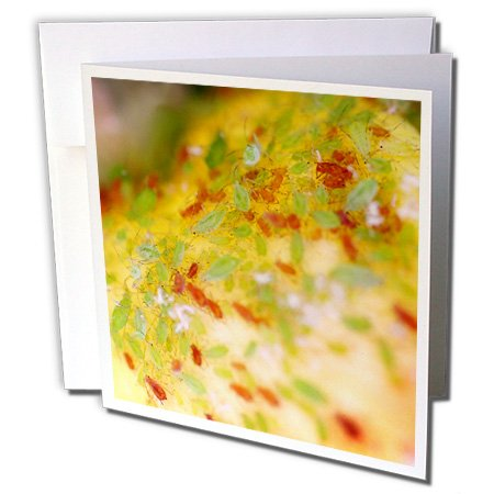 henrik-lehnerer-designs-animal-green-and-brown-aphids-infesting-a-rose-bush-1-greeting-card-with-env
