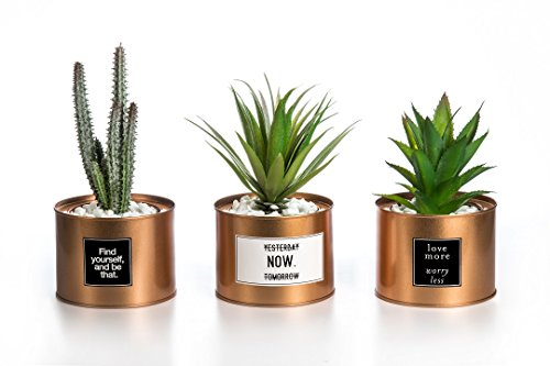 Plants Plastic Green Grass Cactus with Special Golden Can Pot Design for Home Décor – Set of 3 ()