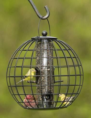 Gardener's Supply Company Squirrel Resistant Globe Cage Mixed Seed Bird Feeder (Proof Squirrel Globe Seed)