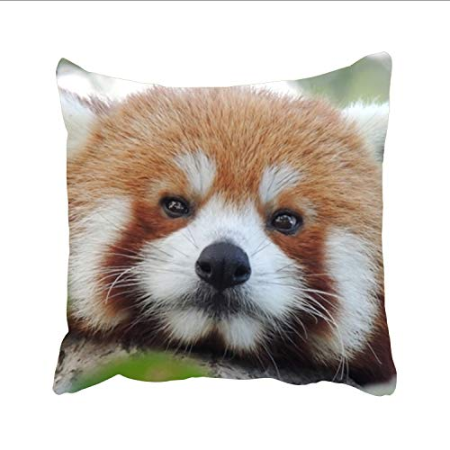 Free Red Panda Wallpaper Throw Cushion Cover Home Decorative Indoor/Outdoor Pillow Sham 20 x 20 inch