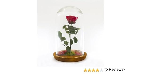 Rosa encantada de la Bella y la Bestia - Cúpula de cristal 27cm.