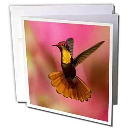 Amazon 3drose danita delimont hummingbirds ruby topaz 3drose danita delimont hummingbirds ruby topaz hummingbird 6 greeting cards with envelopes m4hsunfo