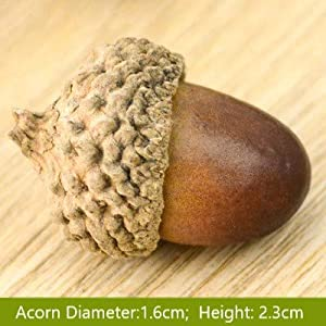 ONWON 100pcs Simulation Artificial Lifelike Small Acorn with Natural Acorn Cap for DIY Decoration Crafting Home House Kitchen Decor - Fake Fruit Props Acorns 5