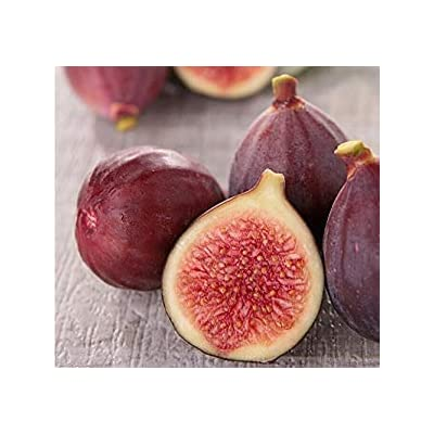 100pcs Fig Seeds Fig Tree Seeds Edible Fig Plant Fig Tropical Seeds Rare Fruit Seed Home Planting : Garden & Outdoor