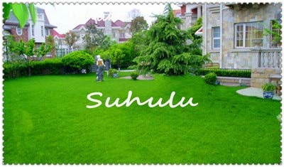 Shopvise 300 Pcs Real Summer Virgo Excluded Us Imports of Turf Grass Lawn Plant Course Villa Courtyard Dedicated Trampled: 5