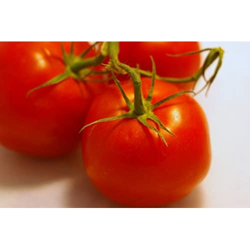 *49 Days*Rare*SIBERIAN TOMATO*25 seeds*COLD HARDY #1084 for sale