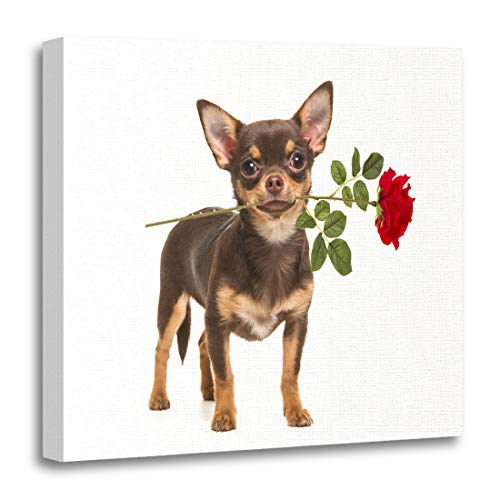 Emvency Canvas Wall Art Print Animal Pretty Brown Chihuahua Dog Standing and Facing The Camera Holding Red Rose in Its Mouth White Cute Artwork for Home Decor 12 x 12 ()
