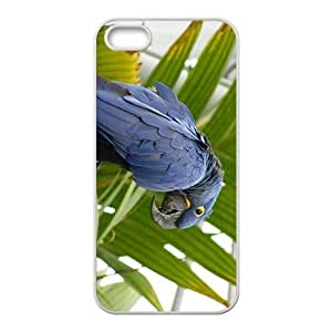 Black Parrot Hight Quality Plastic Case for Iphone 5s