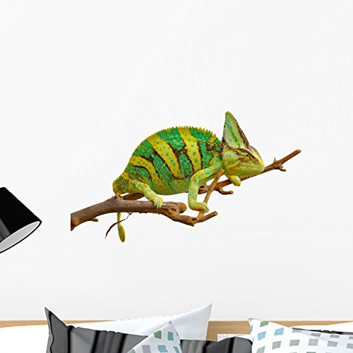 - Wallmonkeys Chameleon Wall Decal Peel and Stick Graphic (24 in W x 16 in H) WM245152