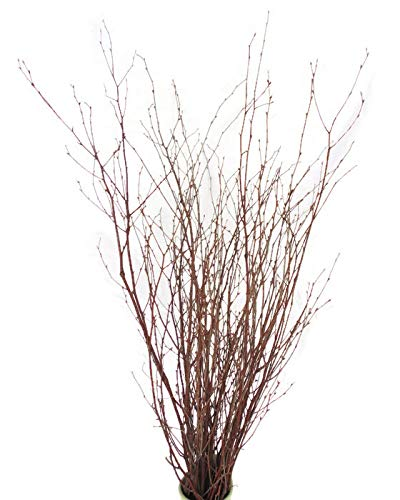 Tin Roof Treasure Natural Birch Branches 2-3 ft. Pack of 40