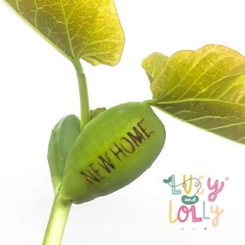 Home Sweet Home Tarjeta de felicitaci/ón dise/ño de frijoles plantables