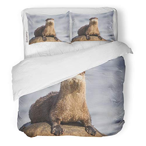 Semtomn Decor Duvet Cover Set Twin Size North American River Otter Lontra Canadensis on Rock in Qualicum Beach British 3 Piece Brushed Microfiber Fabric Print Bedding Set Cover]()