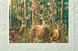 White-Tailed Deer Birthday Greeting Single (1) Card w/Env -