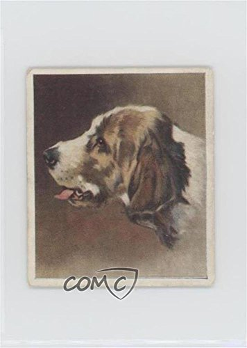 Otter Hound Ungraded COMC Good to VG-EX (Trading Card) 1939 Godfrey Phillips Our Dogs - Tobacco [Base] #30 (Tobacco Phillips Card)
