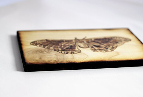 Wood Burned Polyphemus Moth Pyrography Small Woodburned Nature Insect Picture by Hendywood (Image #4)