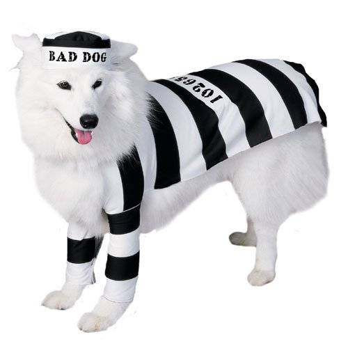 Prisoner Dog Pet Costumes (Prisoner Medium Dog Pet Costume)