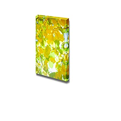 Canvas Prints Wall Art - Yellow Autumn Leaves on The Tree with Sunlight | Modern Wall Decor/Home Decoration Stretched Gallery Canvas Wrap Giclee Print & Ready to Hang - 18