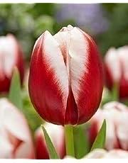 Bulbi 20 Pezzi Tulipano Varietà Leen Van Der Mark Olandese Fiori Rosso/Giallo Perenne Da Giardino Profumati Prato Vaso 10/11 60 Cm