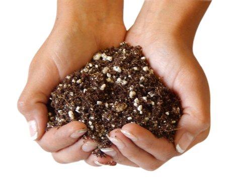 Organic Succulent and Cactus Soil - 1 Gallon (4 Dry Quarts) ()