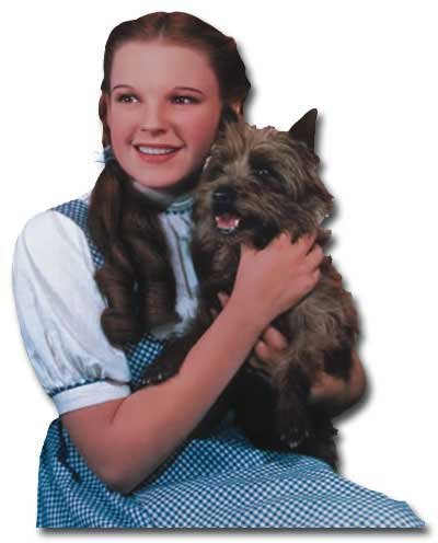Wizard Of Oz Greeting Card Dorothy &