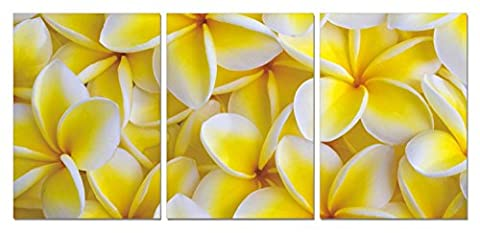 SLS Vision. Plumeria Dream. 59 x 28 inches. Ready to Hang. Contemporary Art, Modern Wall Decor, 3 Panel Commercial Grade Machine Framed Giclee Canvas Print. Home Decoration Painting. - Seaside Dreams Panel Bed