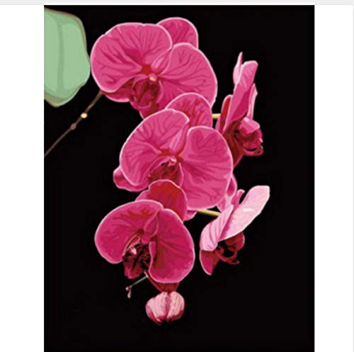 Flor Sin Marco Pintura Al Óleo Por Números Sobre Lienzo Para Colorear Decoración De La Pared Diy Pintura Digital Orquídea Mariposa 50X60Cm