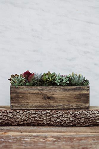 Hallmark Flowers Succulent Garden In 10-Inch Wood Trough by Hallmark Flowers (Image #2)