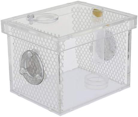 [해외]B Blesiya 작은 파충류 곤충 스파이더 개구리 사육 상자 사육 상자 지우기 상자 아크릴 실용적인 기준 크기-S / B Blesiya Small Reptile Insect Spider Frog Breeding Box Breeding Box Clear Box Acrylic Practical 2 Sizes - S