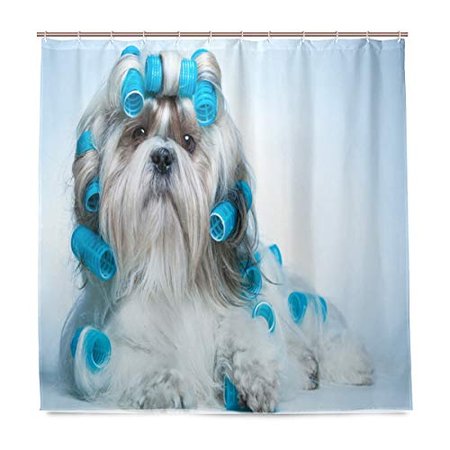 Dog Lover Decor Collection,Shih Tzu Dog with Curlers Grooming Hairstyle Salon Front View Closeup Studio Shot,Polyester Fabric Bathroom Shower Curtain,72 by 72 inches,Blue Beige