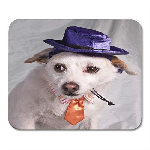 Emvency Mouse Pads Angry Orange Dog Chihuahua in Halloween Costume Purple Boss Mouse Pad for notebooks, Desktop Computers mats 16