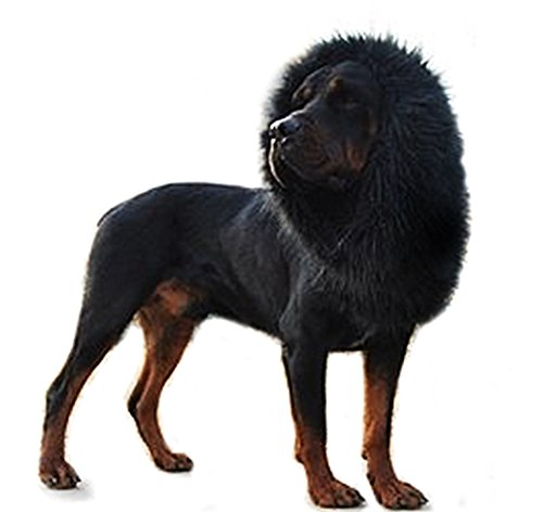 Onmygogo Lion Mane Wig for Dogs with Ears, Funny Pet Costumes for Halloween Christmas (Black) - Devil Costume For Dogs