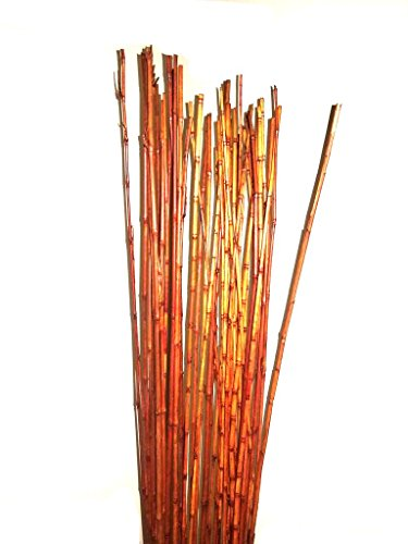 Natural Thin bamboo Stakes Over 5 Feet Tall - Pack of 20 (Natural (Stick Vase)