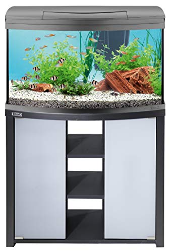 loja-de-peixes-online