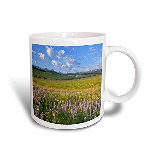 3dRose (mug_92023_2) Wildflowers, Gallatin Mountain Range, Bozeman Montana - US27 CHA2510 - Chuck Haney - Ceramic Mug, 15-ounce
