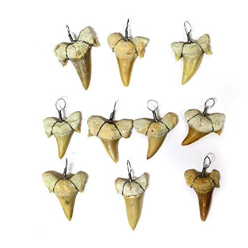 10 Shark Tooth Charm Pendant - 10 Wire Wrapped Fossilized Shark Teeth for Necklace - RP COA AM8B6-02 ()