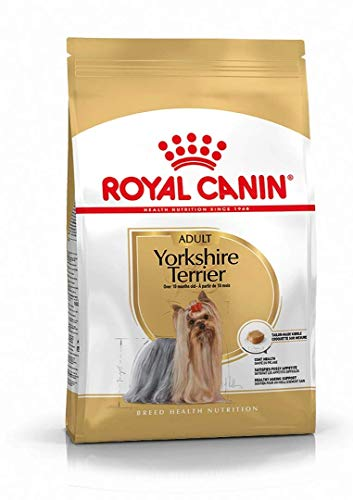 RC Yorkshire Terrier 28 (1)