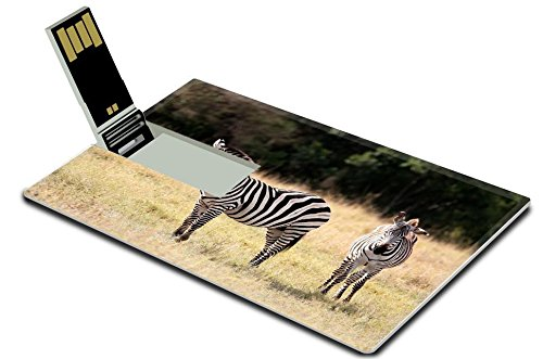 (Luxlady 32GB USB Flash Drive 2.0 Memory Stick Credit Card Size The Grevy s zebra Equus grevyi sometimes known as the imperial zebra IMAGE 21196645)