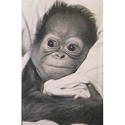 snuggle baby monkey poster art print