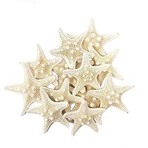 41EoENdE-NL._SS300_ Seashell Wedding Favors & Starfish Wedding Favors