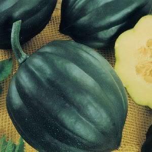- 50 TABLE QUEEN ACORN SQUASH Winter Cucurbita Pepo Vegetable Seeds