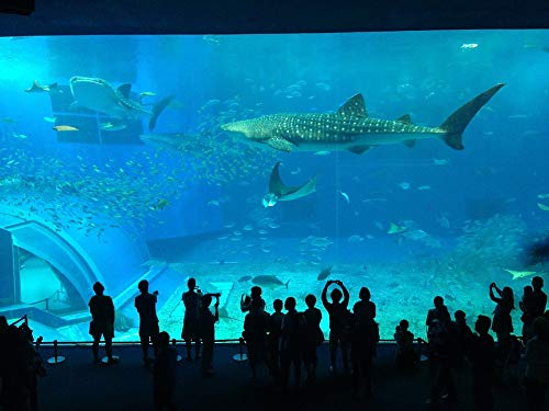 Home Comforts Peel-n-Stick Poster of Shark People Aquarium Crowd Tourist Attractions Vivid Imagery Poster 24 x 16 Adhesive Sticker Poster Print