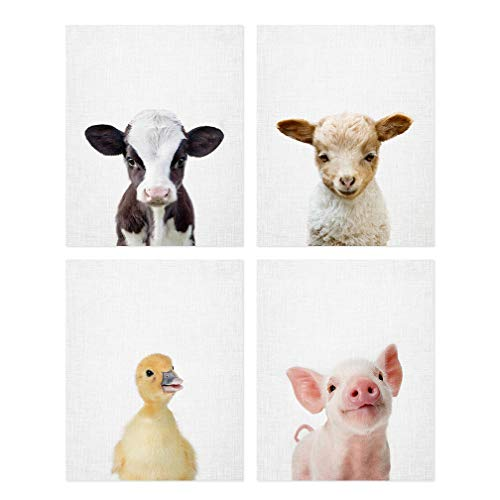 Baby Farm Animal Prints 8x10 (tx) - Set of 4 Adorable Furry Baby Animal Portraits - Baby Lamb, Baby Cow, Baby Pig, Duckling - Nursery Animal Wall Art - Nursery Decor Unframed Prints