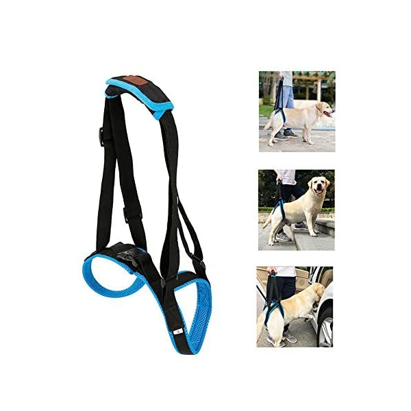 Dog-Support-Harness