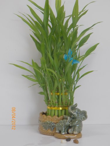 3 Layers Tower Lucky Bamboo with Ceramic (Lucky Bamboo Pot)