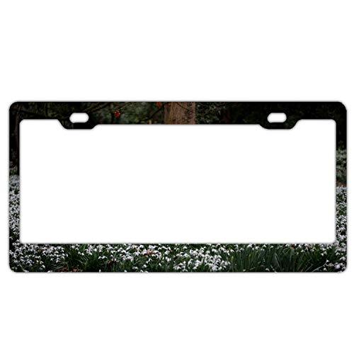 se Plate License Frame Flowers Flower Bed Tree Custom Metal License Plate for Car Novelty License Plate 12X6 inch ()