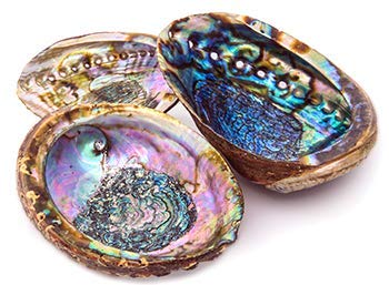 Alternative Imagination Hand Selected Abalone Shell, 5.5 Inches or Larger. Perfect for Holding Incense, Trinkets, and More by Alternative Imagination (Image #3)
