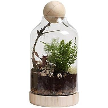 Twig Terrariums Lucky Gardener Terrarium Kit