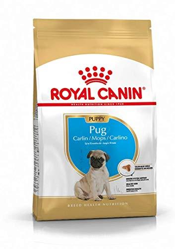 ROYAL CANIN 21037/3279 Mops Trocken Junior/Welpenfutter – 1.5kg