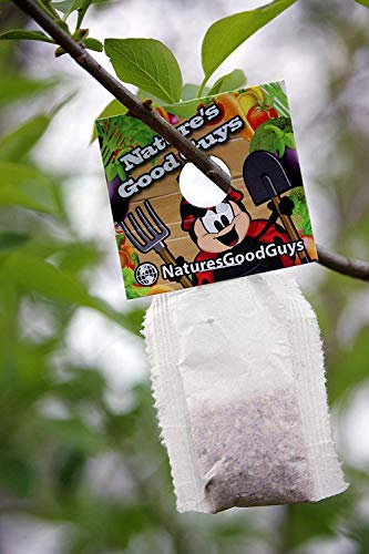 Nature's Good Guys 10 X 1,000 Live Neoseiulus Amblyseius Cucumeris - Guaranteed Live Delivery! (Pirate Bugs)